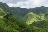 Tahiti, Papenoo valley in the mountains, luxuriant bushy vegetation  - 175308983