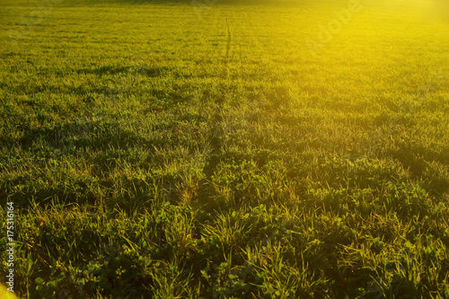 Grass under the rays of the sun