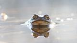 frog in water  nature wildlife outdoor - 175318118