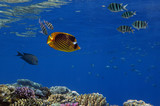 Beautiful underwater world with corals and tropical fish - 175320113