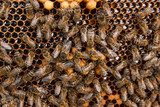 Busy bees, close up view of the working bees on honeycomb. . - 175321390