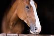 Portrait of a beautiful purbred horse - 175326129