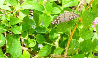 A moth on a leaf.