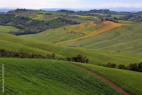 Fotobehang Zomer Tuscany farmland hill fields in Italy