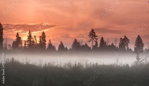 Foto op Canvas Zee zonsondergang Autumn fog at misty field near the dark forest under the red sunrise