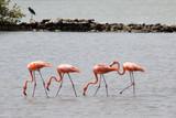 Flamingos in der Karibik - 175346760