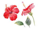 Watercolor hibiscus flower set - 175351573