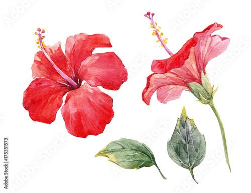 Zestaw kwiat hibiskusa akwarela