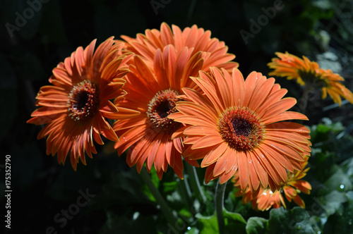 Aluminium Gerbera Gerbera flower