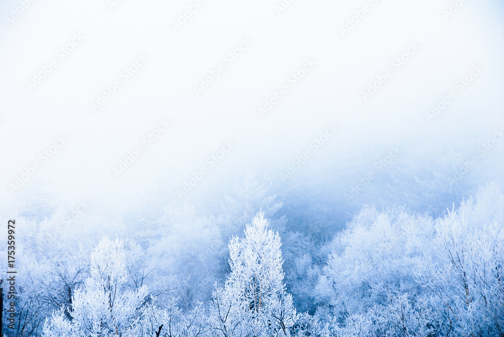 冬の道東 霧氷(北海道・川湯温泉)