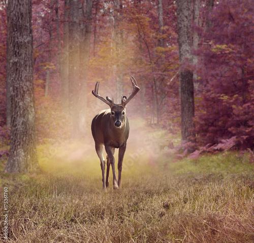 Fotobehang Hert Deer in autumn forest