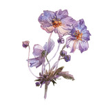 Phlox flowers hand drawn watercolor - 175362532