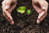 Human hands protecting green small plant life concept.Ecology concept.