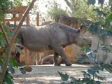 rhino - 175373907