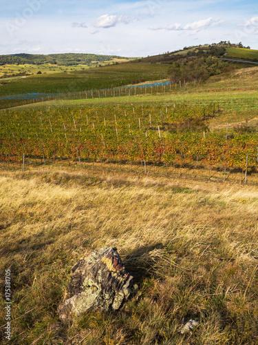 Aluminium Wijngaard Weingarten im Herbst auf den Huegeln bei Jois
