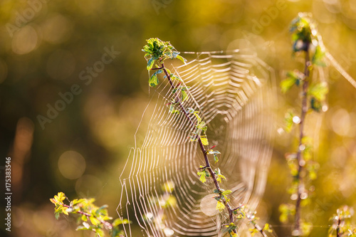 Tuinposter Herfst Cobweb in the morning sunlight in the fall