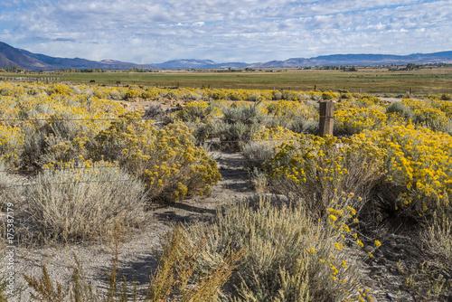 Foto op Plexiglas Honing Ranchland, Gardnerville, NV