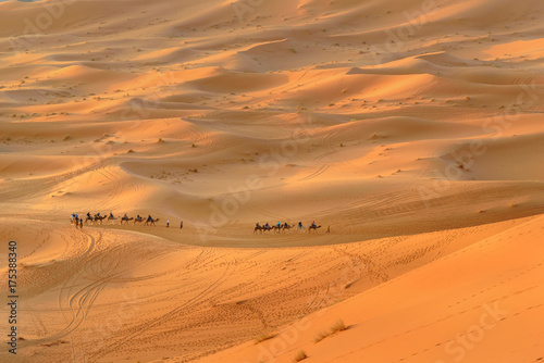 Fotobehang Kameel Caravan of Camels in Erg Chebbi Sand dunes near Merzouga, Morocco
