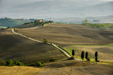 Tuscan landscape, Val d'Orcia, Tuscany, Italy - 175397120