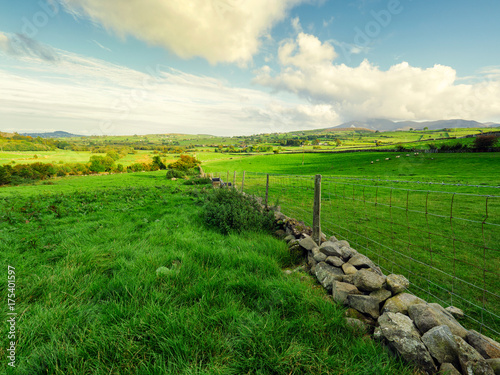 Fotobehang Groene Early Autumn countryside morning,Northern Ireland