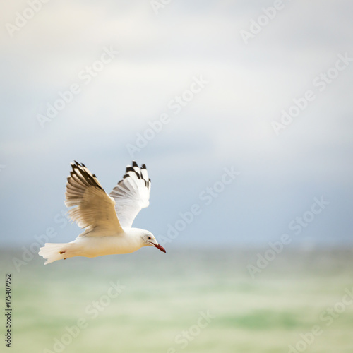 Bird Flying Over Ocean - 175407952