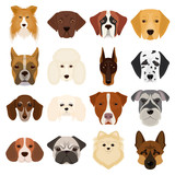 Doberman, Dalmatian, Dachshund, Spitz, Stafford and other breeds of dogs.Muzzle of the breed of dogs set collection icons in cartoon style vector symbol stock illustration web. - 175408919