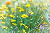 Spring Flowers - 175411770