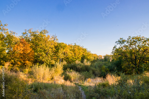 Tuinposter Herfst Beautiful autumn forest with yellow and red trees at sunset