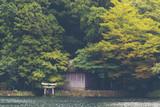 tropical forest in Japan, vintage filter image - 175421967