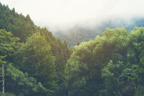 tropical forest in Japan, vintage filter image - 175421973