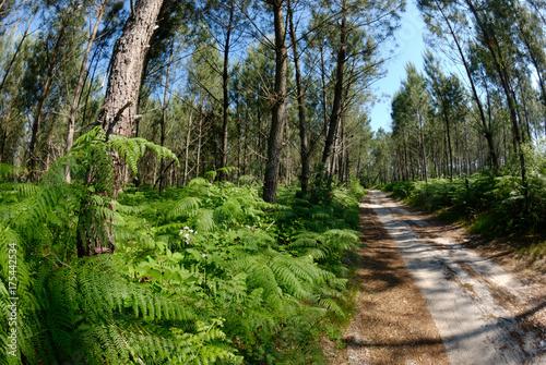 Papiers peints Route dans la forêt Forêt des Landes, Nouvelle-Aquitaine, Landes, France