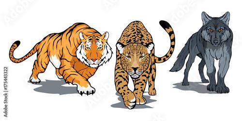 Zestaw zwierząt, w tym tygrys bengalski, lampart, wilk