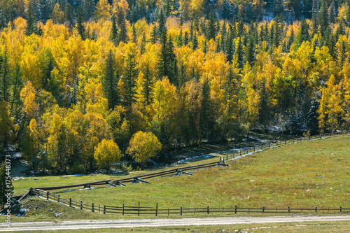Poster Honing Autumn forest in Altai Mountains, Siberia, Russia.