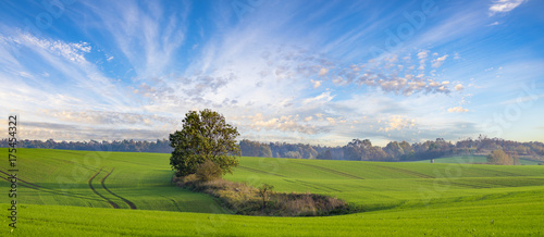 Fotobehang Blauwe hemel autumn on the fields in Germany, green winter chestnut, blue sky and colorful leaves on the trees