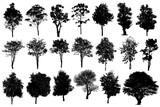 Collection Of Silhouette Of tree Isolated On White Background - 175457519