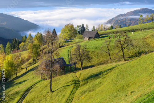 Foto op Canvas Gras View from Pokljuka Plateau, Slovenia