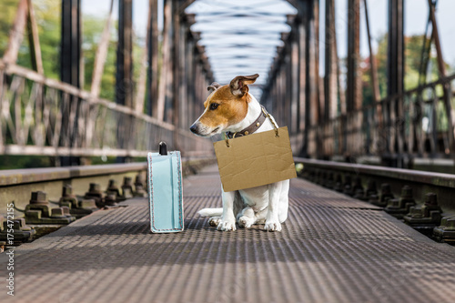 Papiers peints Chien de Crazy lost and homeless abandoned dog