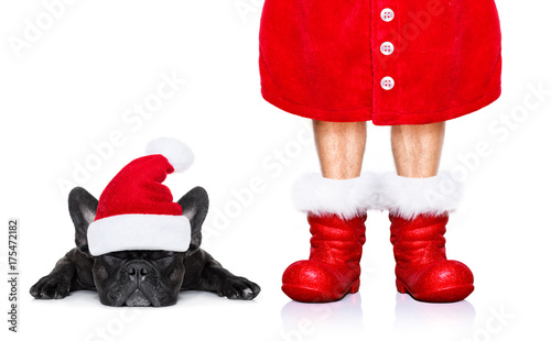 Keuken foto achterwand Crazy dog christmas santa claus dog