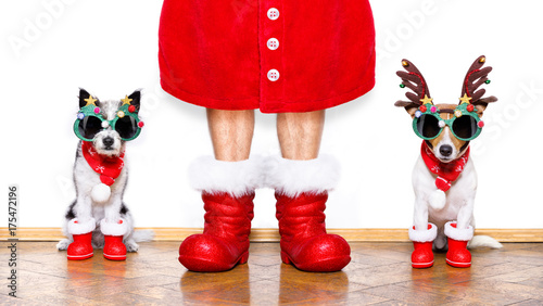 Keuken foto achterwand Crazy dog christmas santa claus dogs