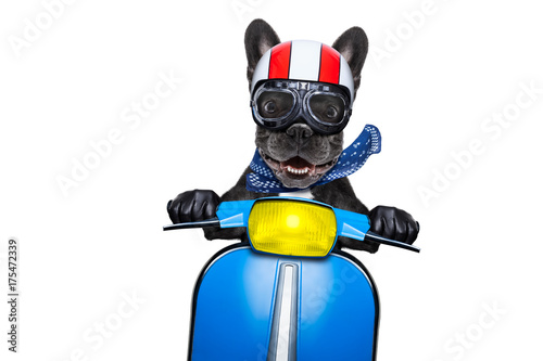 Papiers peints Chien de Crazy dog on motorbike