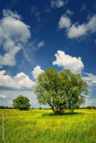 Aluminium Lente Summer meadow with trees