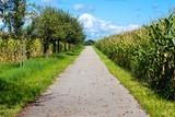 Landschaft mit einem Weg inmitten von Maisfeldern und Obstbäumen vor blauem Himmel mit Wolken im Spätsommer. - 175483575