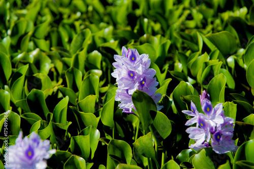 Blume auf einer Landschaft