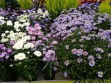 fleurs d'automne - 175501786
