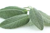 Salvia in foglie - 175502346