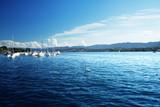 Zurich lake with yachts, Switzerland - 175504160