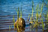 (Ein)Stein im See - 175513142