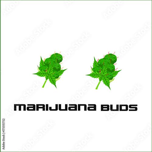 Marijuana Buds Vector Illustrated