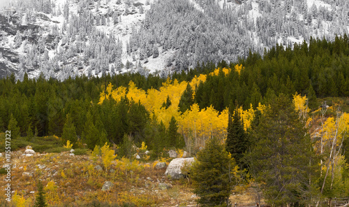 canvas print picture Aspens