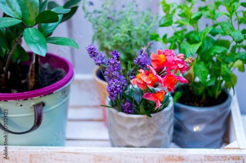 Kwiaty dom